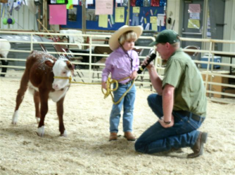 """Bottle calves"" are calves that were orphaned or refused by their mothers, leaving it up to the ranchers to feed (often with a bottle) and care for. Youngsters can bring these bottle calves to the local county fair to show."