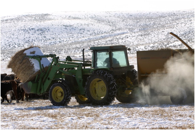 Sublette County Wyoming ranchers feed hay to cattle with a John Deere tractor in the winter