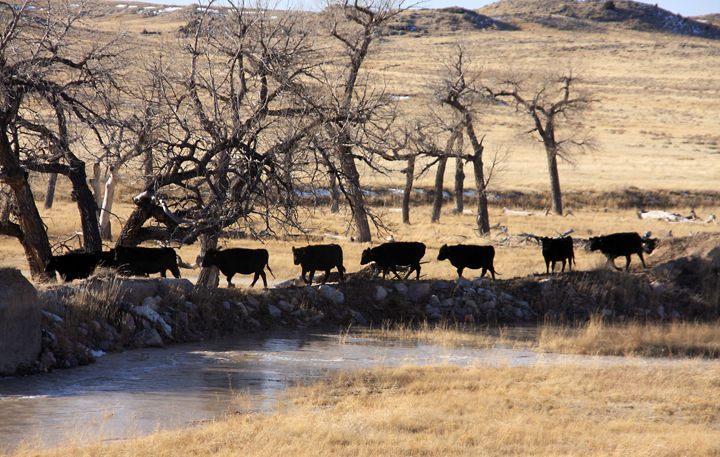 Niobrara County flooding has caused problems for ranchers and other residents not used to the unusual amounts of water.