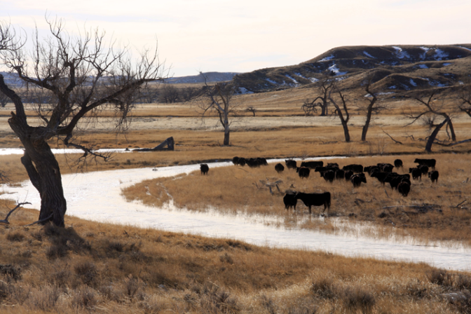 Excess water is causing problems for ranchers and livestock in Niobrara County Wyoming this winter