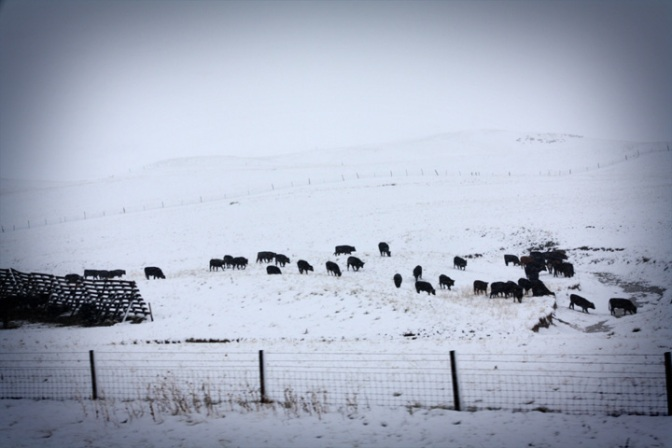 It snowed several inches on May 11-12 2011 in rural Wyoming