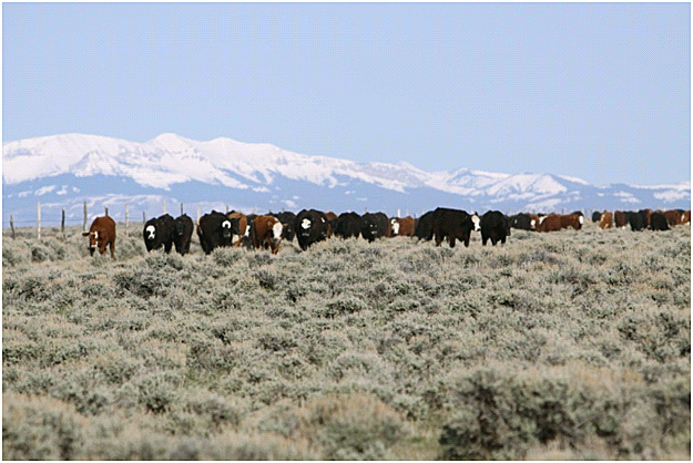 Rancher talks about grazing on private, state and federal lands with their cattle