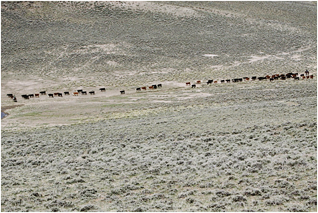 The history of grazing on private and federal land in Wyoming