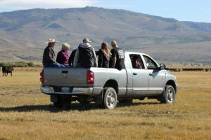 Tour participants load into a truck to view the cow/calf pairs at Jensen Angus in Wyoming