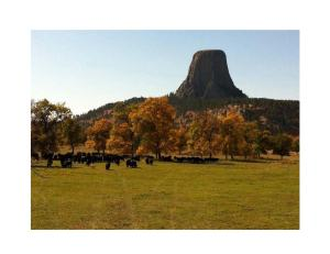 Fall Autumn Devils Tower Cattle