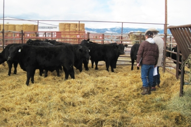 RealRanchers Rob & Carla Crofts took a family vacation to the Redland Angus Bull Sale in Buffalo, Wyoming this winter.
