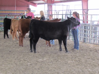 RealRancher Katie Keith shows her cattle in the show ring.