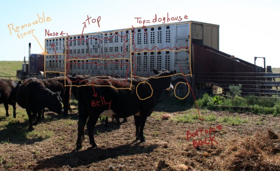 RealRancher Heather Hamilton talks about how to move cattle from place to place when cattle drives aren't an option.