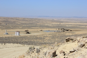 Oil well, water pit and cattle
