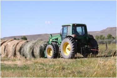 Wyoming ranchers put up hay in the Green River Valley to feed cattle in the Winter.