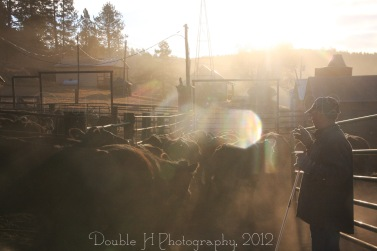 RealRancher Heather Hamilton of Double H Photography from Lance Creek, Wyoming shares how doctoring cattle relates to doctors visits for us.