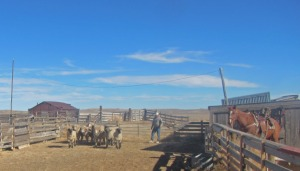 RealRanchers Pat and Sharon O'Toole talk about the drought on their Wyoming sheep ranch