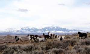 Marathon Oil drills wells to supply water for wild horses and wildlife. Photo copyright Billings Gazette.