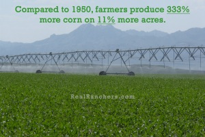 Farmers produce 333% more corn on 11% more acres
