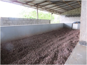 Cocoa seeds in cocoa factory ready to make chocolate outside Guayaquil, Ecuador