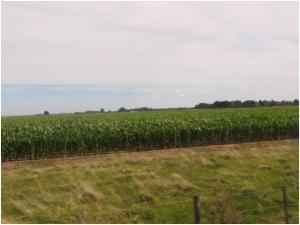 Corn near Montevideo, Uruguay