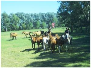 Horse Estancia near San Antonio de Aerco, Argentina