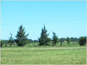Hay on the Pampas northwest of Buenos Aires, Argentinapsd