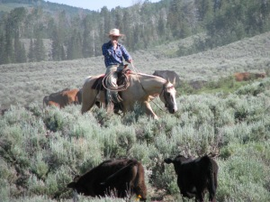"""Looking through the pairs for """"sickies"""" (cattle that need doctoring) and enjoying a ride."""