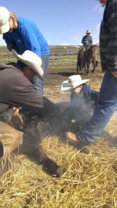 Kagan (age 11) learning how to wrestle calves