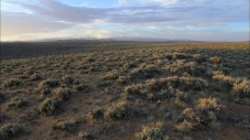 Sagebrush Sea