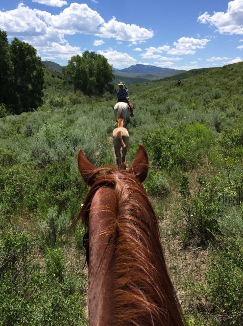week 6 horse