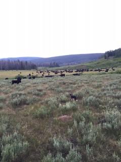 week 10 pasture