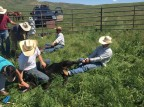 Rangeland Interns-Andrew Mainini's First Week at the E Bar U Ranch