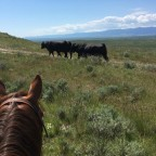 Week 2 for Andrew Mainini-Bulls & Branding at the E Bar U Ranch