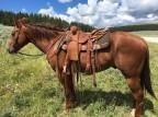 An Intern & His Horse